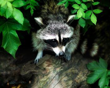 La faune insoupçonnée de New York